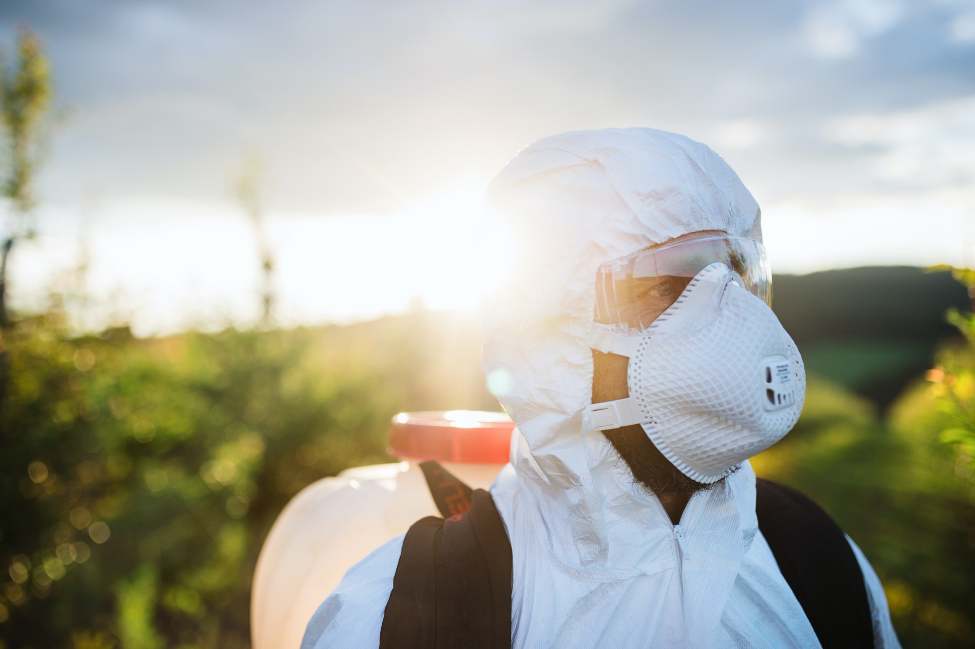 A farmer outdoors in orchard at sunset, using pesticide chemicals