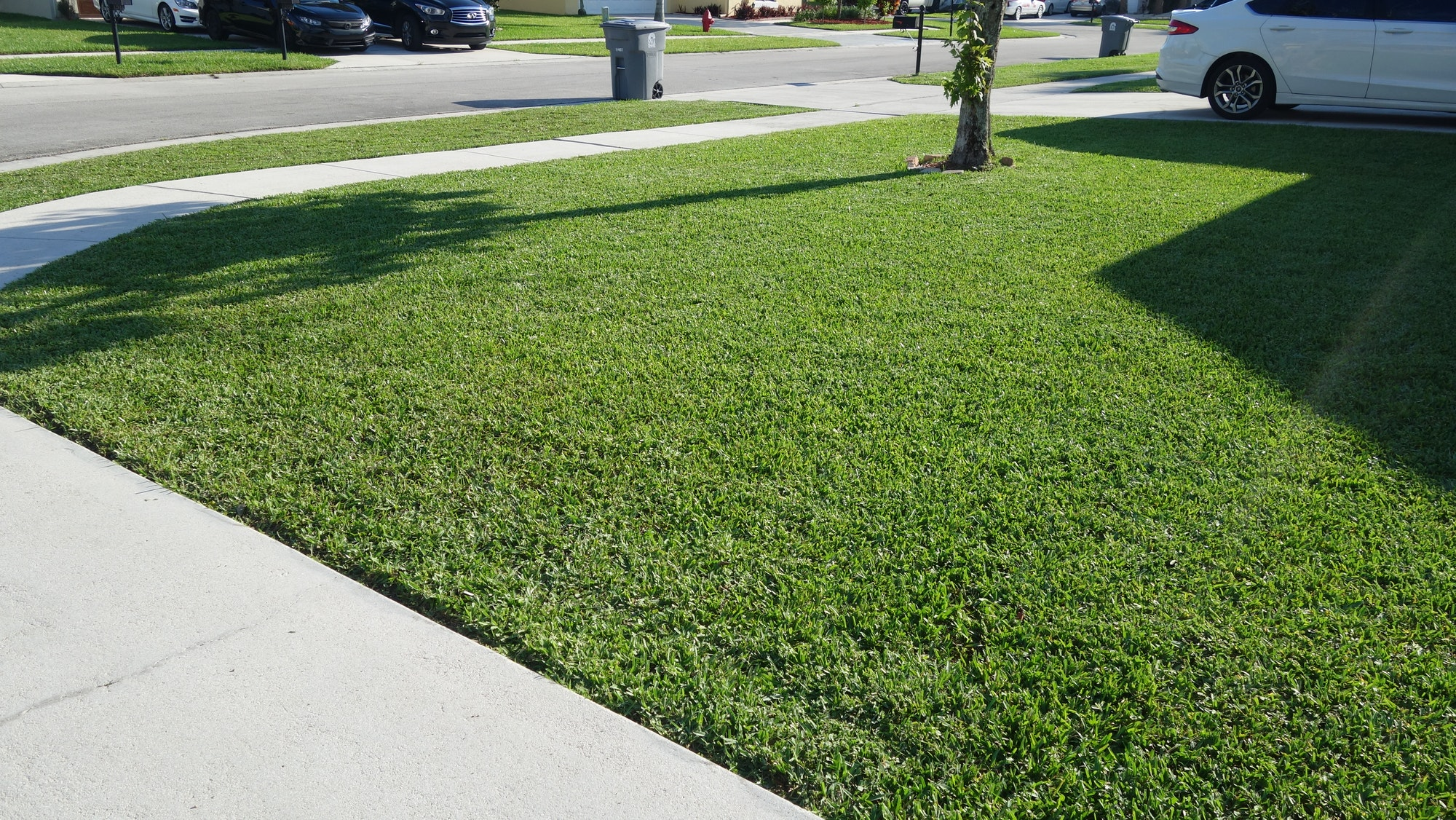 Green Grass Covering A Florida Home's Front Yard