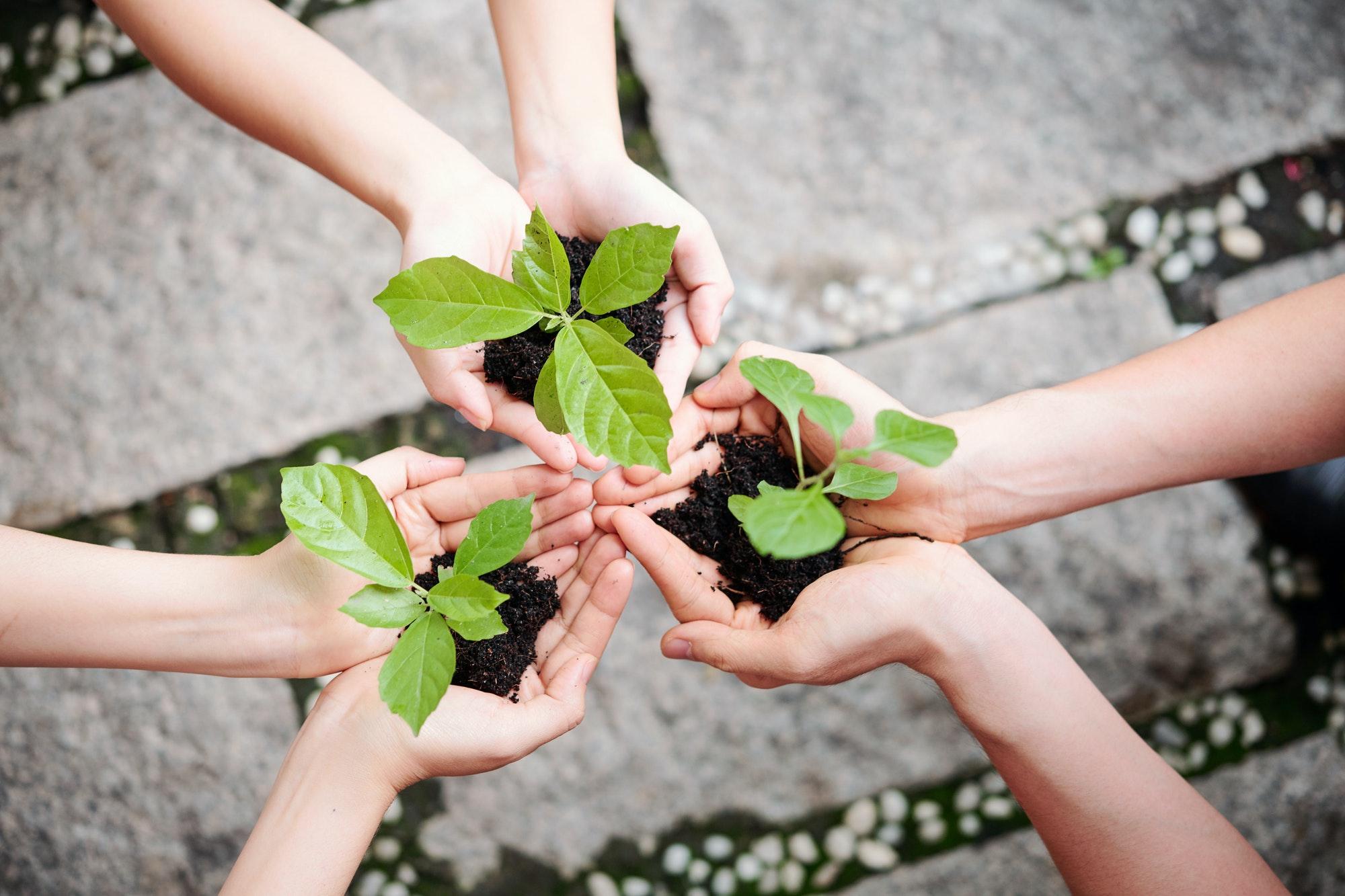 People plant new plants